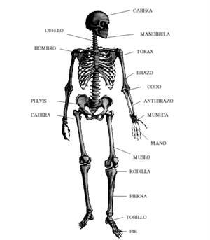 Láminas para estudiar el Cuerpo Humano