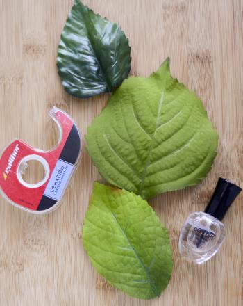 Comparing Leaf Stomata