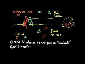 Biología 43 correción del vídeo bomba de sodio y potasio (Khan Academy Español)
