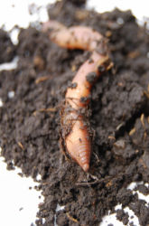 The Preferred Food Of Detritivores: A Composting Project
