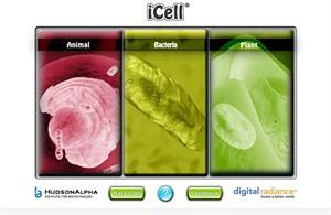 iCell: modelos 3D de distintos tipos de células