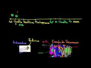 Fotosíntesis reacciones luminosas y foto fosforilación (Khan Academy Español)
