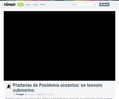 Pradarías de Posidonia oceanica: un tesouro submariño