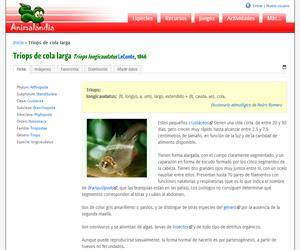 Triops de cola larga (Triops longicaudatus)