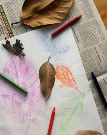 Leaf Rubbings: Shapes and Patterns