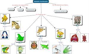 Álbum de cromos de vertebrados