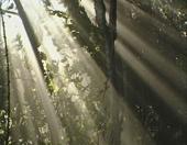 La fageda, el bosc encantat (Edu3.cat)