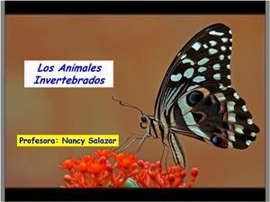 Animales invertebrados 2