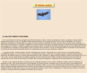 El halcón común, lectura comprensiva interactiva