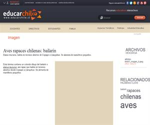 Aves rapaces chilenas: bailarín (Educarchile)