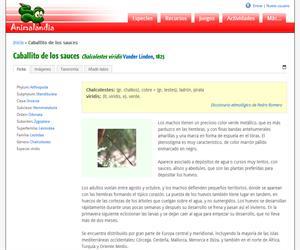 Caballito de los sauces (Chalcolestes viridis)