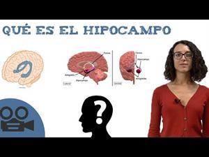 ¿Qué es el hipocampo?