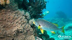 La gran barrera de coral (World Wonders Project)