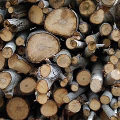 La actividad forestal en el Uruguay