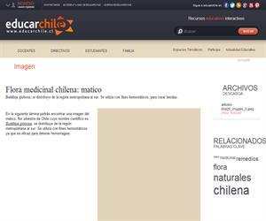Flora medicinal chilena: matico (Educarchile)