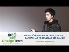Infección por Rickettsia spp. en carrachas recollidas en Galicia
