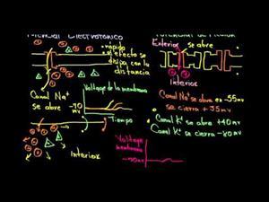 Potencial de acción y electrónico (Khan Academy Español)