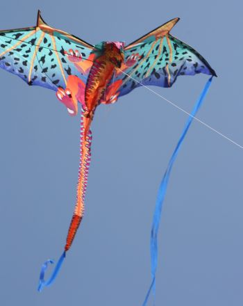 The Best Day to Fly a Kite
