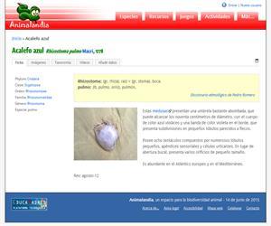 Acalefo azul (Rhizostoma octopus)