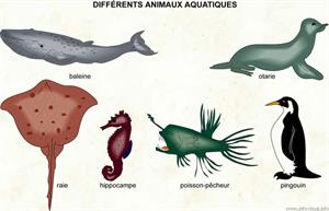 Animaux aquatiques (Dictionnaire Visuel)