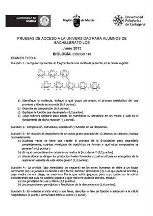 Examen de Selectividad: Biología. Murcia. Convocatoria Junio 2013