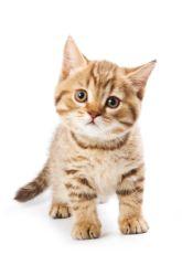 Speaking Cat