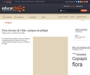 Flora silvestre de Chile: copiapoa de philippi (Educarchile)