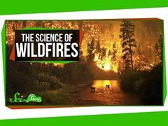 A ciencia dos incendios forestais