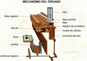 Mecanismo del órgano (Diccionario visual)
