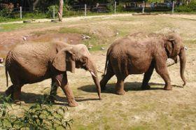 Elefante. Estructura y función de los seres vivos