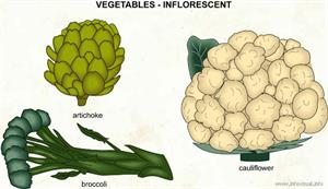 Inflorescent  (Visual Dictionary)