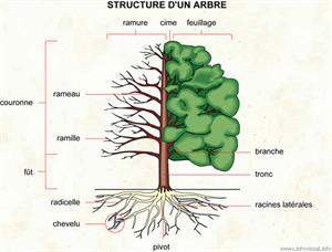 Arbre (Dictionnaire Visuel)