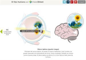 El ojo humano. ¿Cómo vemos? (VisionDirect)