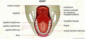 Goût (Dictionnaire Visuel)
