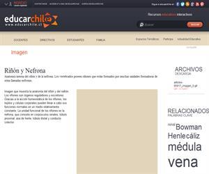 Riñón y Nefrona (Educarchile)