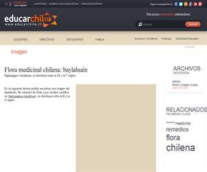 Flora medicinal chilena: baylahuén (Educarchile)