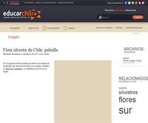 Flora silvestre de Chile: palmilla (Educarchile)