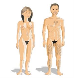 El cuerpo humano: anatomía y fisiología