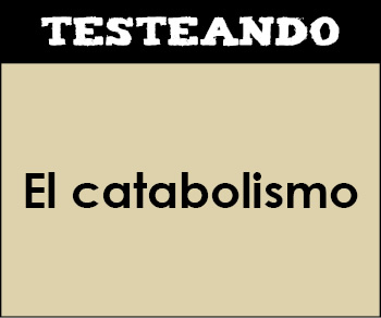 El catabolismo. 2º Bachillerato - Biología (Testeando)