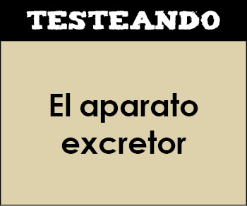 El aparato excretor. 1º Bachillerato - Biología (Testeando)