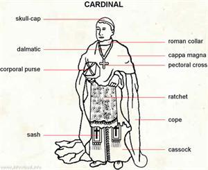 Cardinal (Dictionnaire Visuel)
