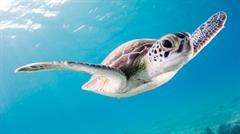 La tortuga apurada (PerúEduca)