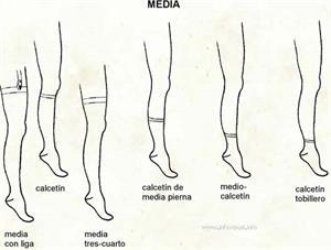 Media (Diccionario visual)