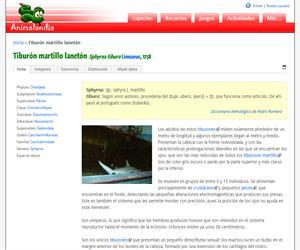 Tiburón martillo lanetón (Sphyrna tiburo )