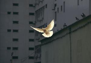 Recursos educativos para el día escolar de la Paz
