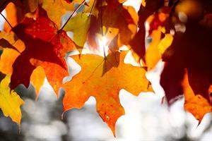 Octubre: fechas clave para trabajar en clase