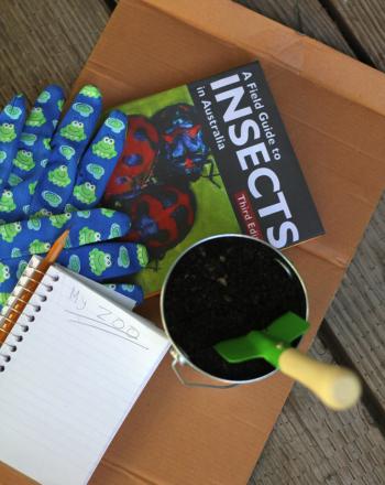 Using Garden Mulch to Make a Bug Zoo