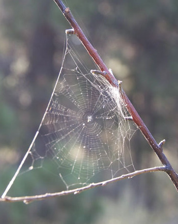 Spider Science: Exploring the World of Webs