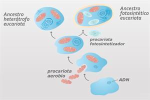 La Teoría Endosimbiótica