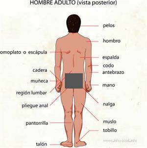 Hombre (Diccionario visual)